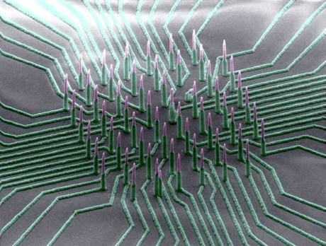 Colorized SEM image of the nanowire array