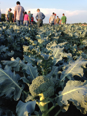 meeting of prospective broccoli growers