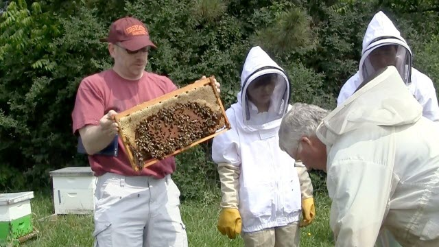 Mark Williams and bee research team