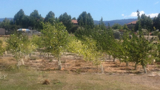 Trees growing on the Silicon Valley test site