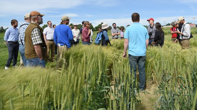 tour of Cornell malting barley fields