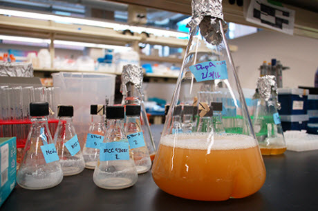 engineered bacteria to brew green chemicals