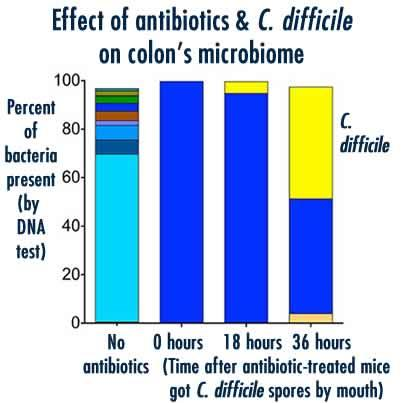 ombination of antibiotics and C. difficile infection