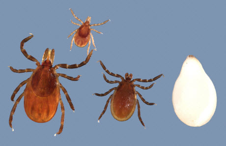 $10M CDC Grant Funds Center to Fight Vector Borne Diseases