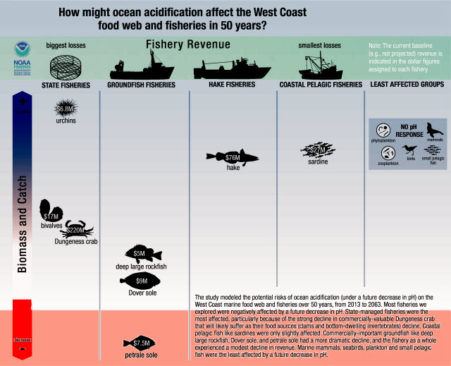 potential risks of ocean acidification