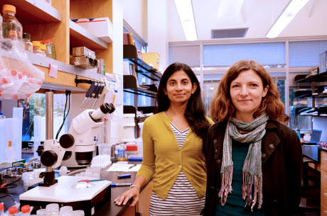TSRI Scientists Find Brain Hormone that Triggers Fat Burning
