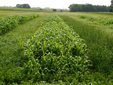 Annual Forage Plots