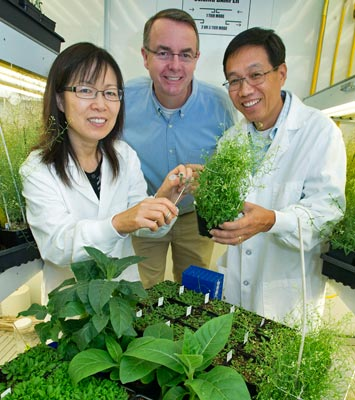 Brookhaven researchers Jilian Fan, John Shanklin, and Changcheng Xu