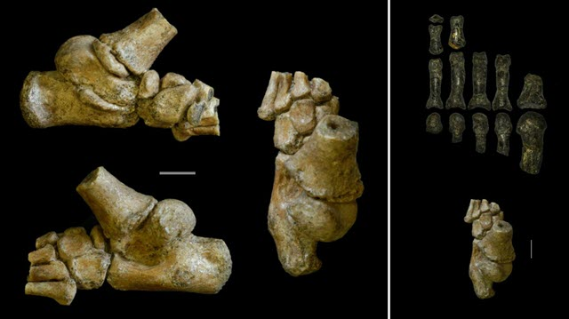 Skeleton shows pre-human toddlers hid in trees for protection