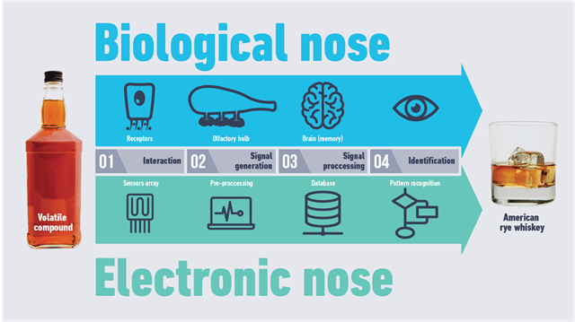 electronic-nose-smell-science-fermentation