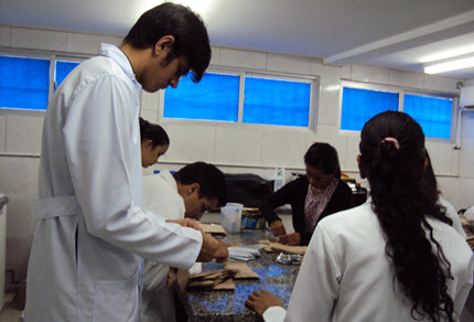 Researchers in the plant ecophysiology laboratory