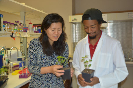 Dr. Libo Shan, Texas A&M AgriLife Research plant pathologist, and doctoral student Kevin Co