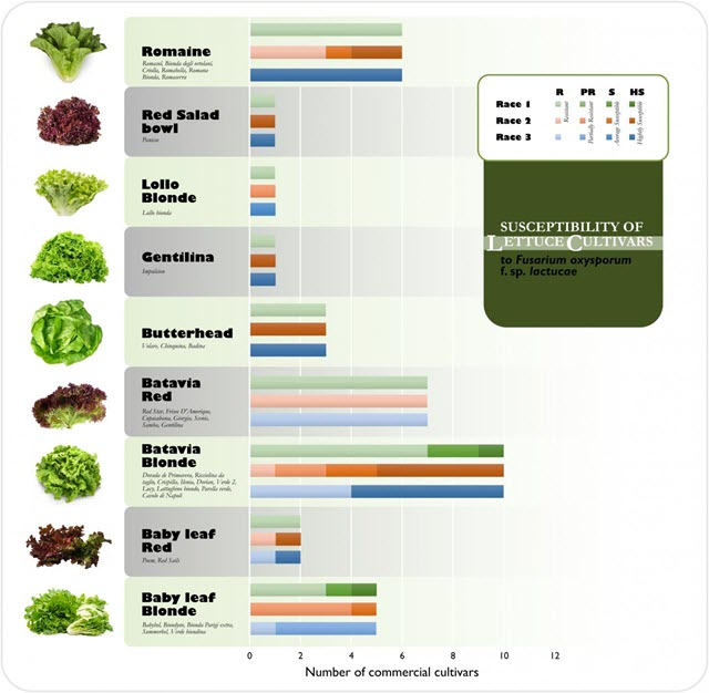 Susceptibility of Lettuce Cultivars