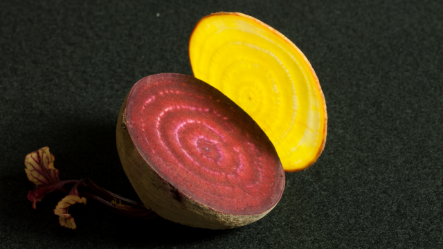 Slices of different colored beets