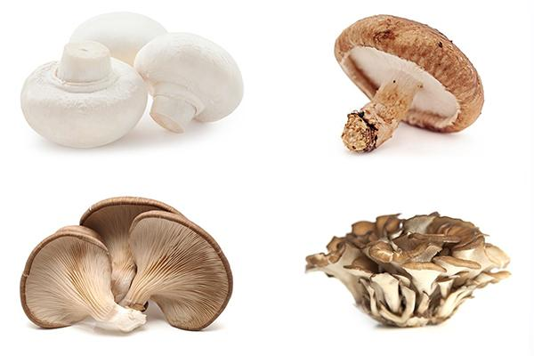 Four different types of mushroom