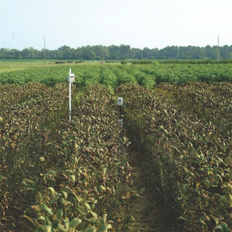 Soybean Rust-Infected Plants in Florida