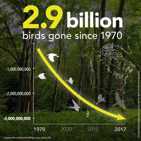 graphic showing loss of 2.9 billion birds since 1970