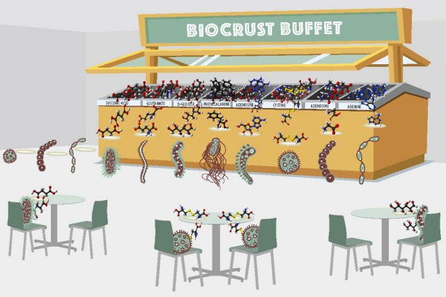 "The Berkeley Lab team examined the diversity of molecules in a biological soil crust (""buffet"") and then used exometabolomics to study how bacteria isolated from this soil deplete (""eat"") specific molecules"