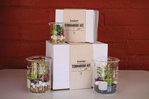 Beaker Terrarium Kit
