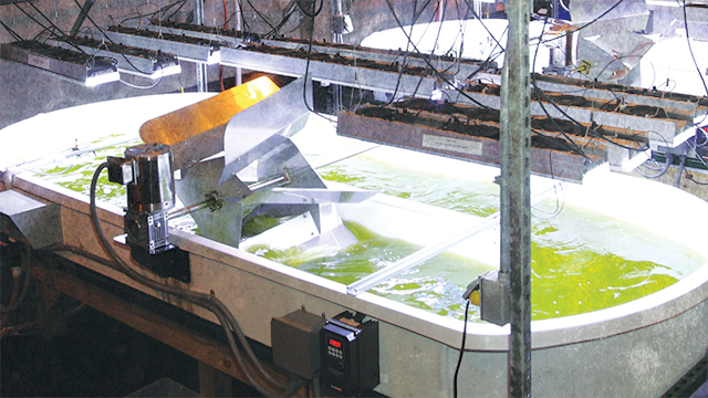 New Sandia Facility Tests Algae's Potential as Biofuel