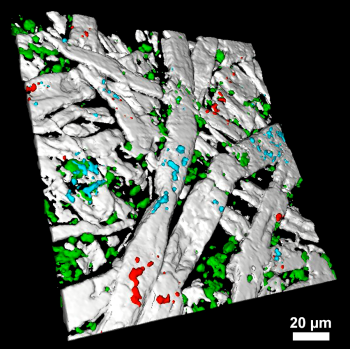 3D Raman image of cellulose fibers and additives in paper